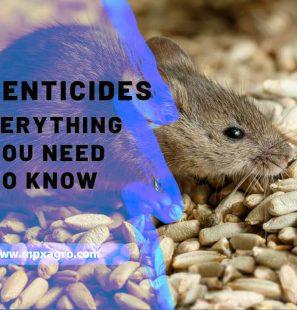 rodenticides-blog